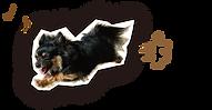 ペット撮影 犬