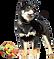 ペット撮影 犬 ギャラリー