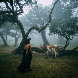 Hide and Seek Cow Editon