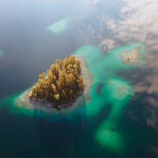 Lake Turtle