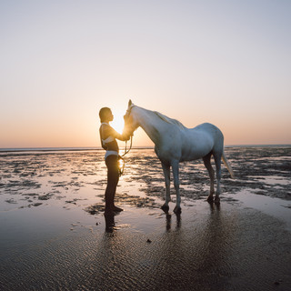 A Horse and the Sea