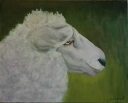 Feeling Sheepish 2009 (2)