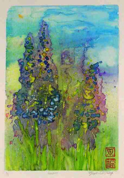 Sold - Lupins