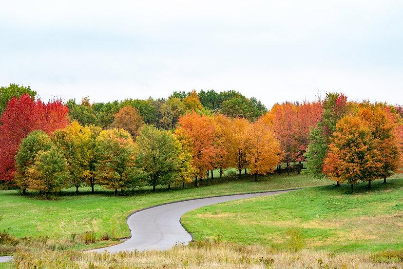 Autumn three mile drive