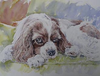 Spaniel watercolour TAKE WITH NEW CAMERA.jpg