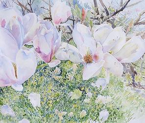 Magnolias out watercolour.JPG