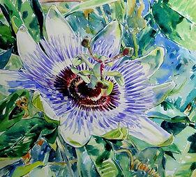 Passion flower watercolour.JPG