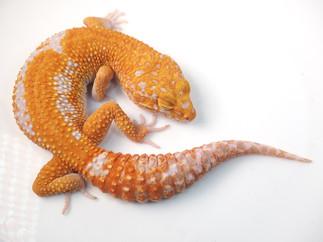 Teodoro (Male)