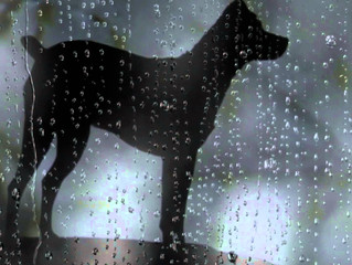 """Review: """"Heart of a Dog"""" (2015)"""