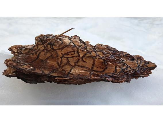 Ponderosa Pine Bark Incense Holder