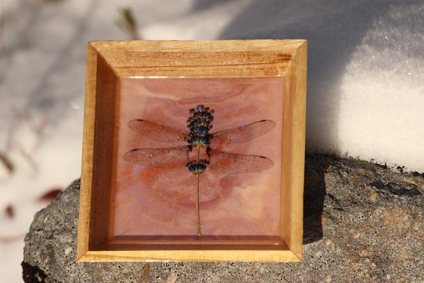 Lavender Dragonfly