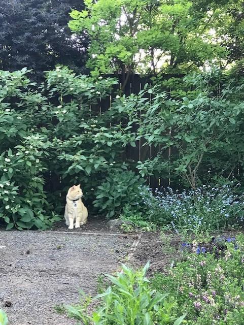O'Donnell Garden - Beaverton, Oregon  2019