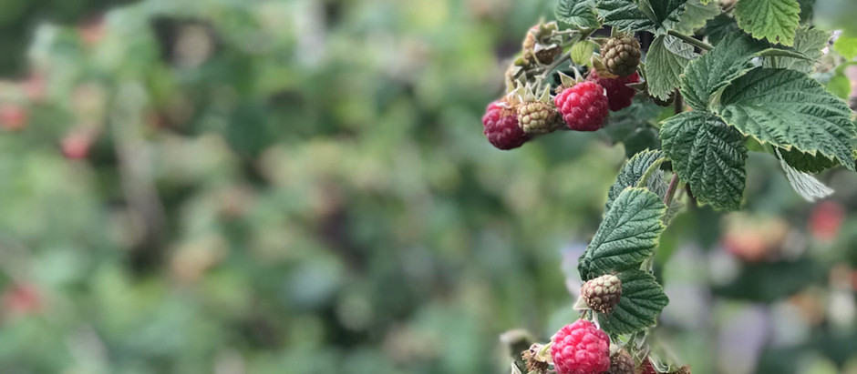 The Year in Raspberries