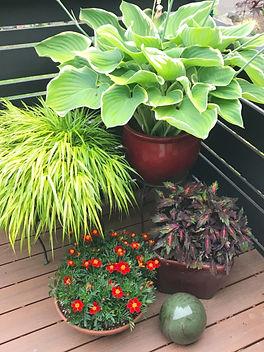 Vibrant Patio Pots on the Deck
