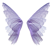 Fairy-Wings-PNG-Image-Transparent-Background.png