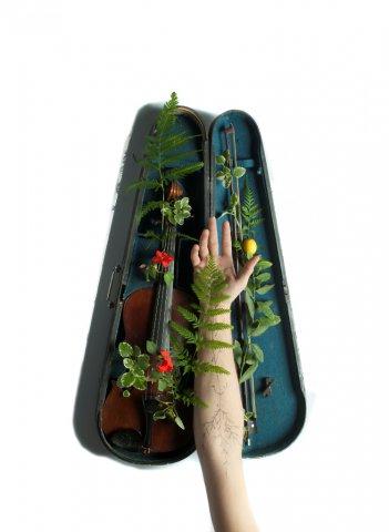 Cuerpo sonoro brazo violin 50x36