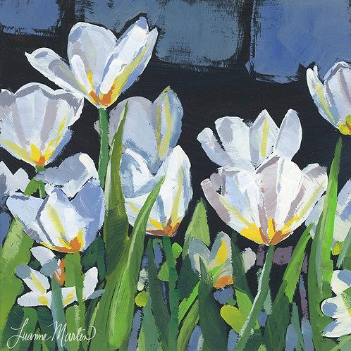White Tulips, high quality art print