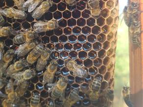 Nektar oder Honig?