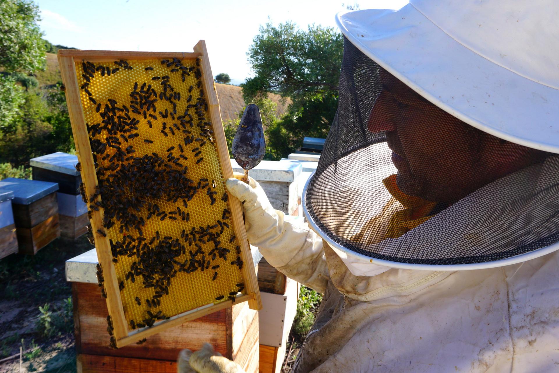 Juan con un panal de abejas