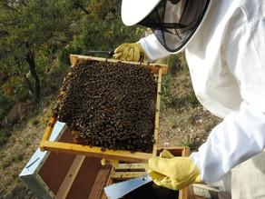 Empezando una nueva aventura: El Arte de cuidar abejas, la Apicultura