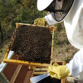 Starting a new Adventure:  Beekeeping