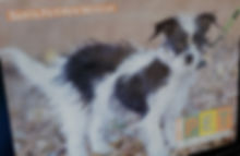 SFNM Pet Calendar 2.jpg