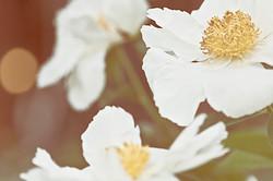 ca-mijote-fleurs3