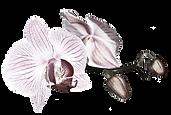 logo d'entreprise en esthétique et naturopathie à bromont