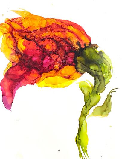 Blooms of Magenta Bending