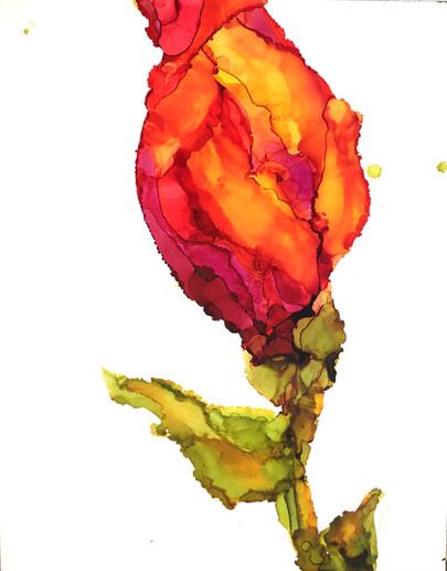 Blooms of Scarlet II