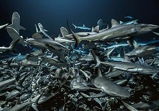 700-requins-dans-la-nuit.png
