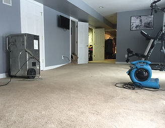 Services Carpetcleaning