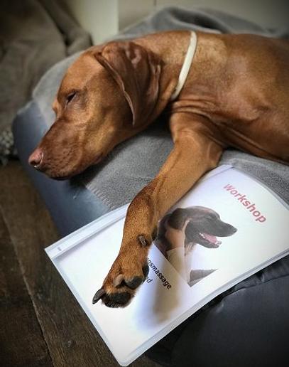 Hondenmassage Maison le Toutou
