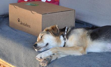 Jemie's Doggybag.jpg