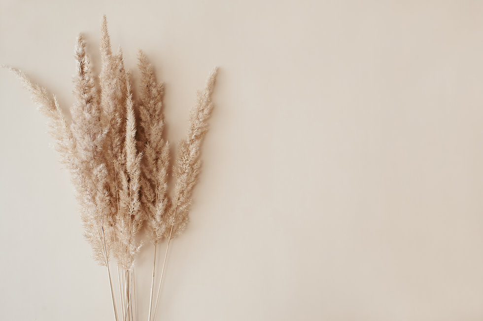 dry-pampas-grass-reeds-agains-on-beige-b