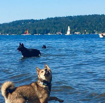 Seattle's Best Off-Leash Dog Parks