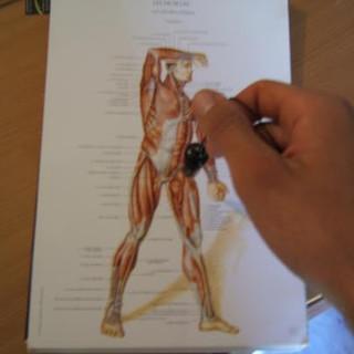 radiesthésie thérapeutique référencement dans Google Images
