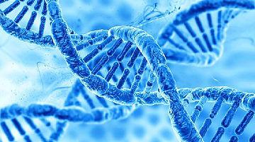 genetic03.jpeg