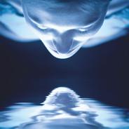 hupnose référencement dans Google Images
