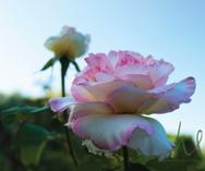 Healdsburg's Secret Garden | Dragonfly Floral