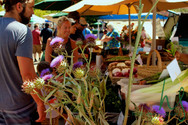 HGB Farmers Market | Saturday 7.9.16