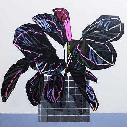'Calathea- Roseopicta' by Donald MacLean