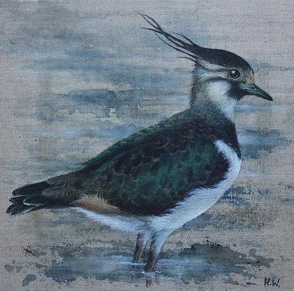 'Lapwing in water' by Helen Welsh