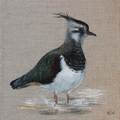 'Female Lapwing' by Helen Welsh