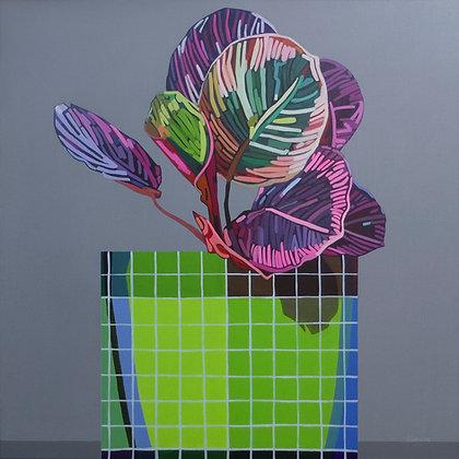 'Maranta, Grid Pot' by Donald MacLean
