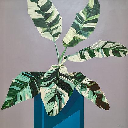 'Variegated Banana' by Donald MacLean