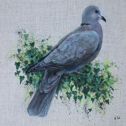 'Collared Dove' by Helen Welsh