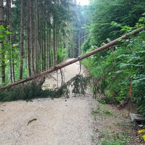 T1, Baum auf Fahrbahn