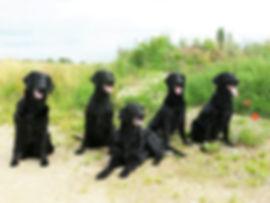 Alle 5 Hunde Oktober 2016