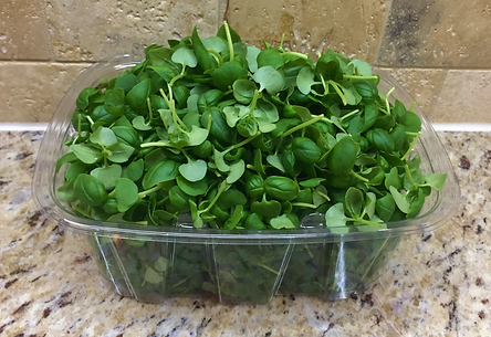 Image result for microgreens use